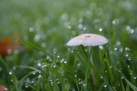 dew on a delicate mushroom
